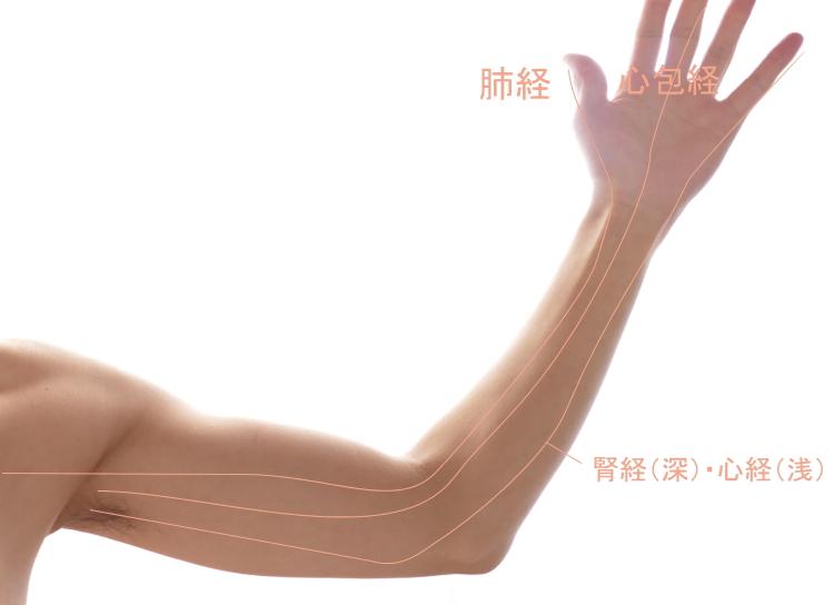 腕の経絡(内側の陰経)