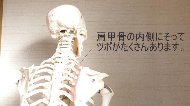 肩こりのツボ・肩甲骨のツボ