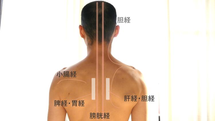 背中の経絡