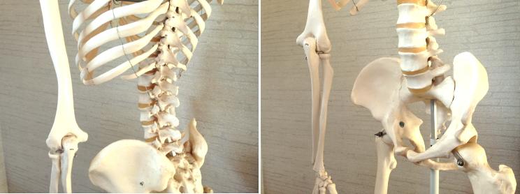 腰の構造・骨格