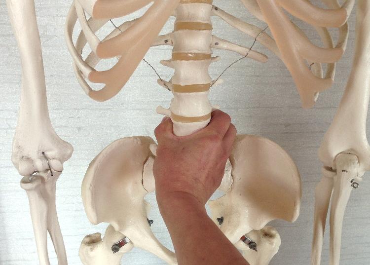 腰の骨・腰椎1~5番