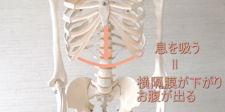 腹式呼吸のやり方