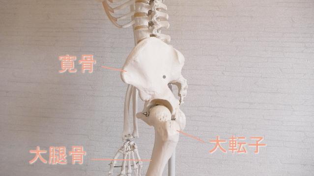 股関節の構造