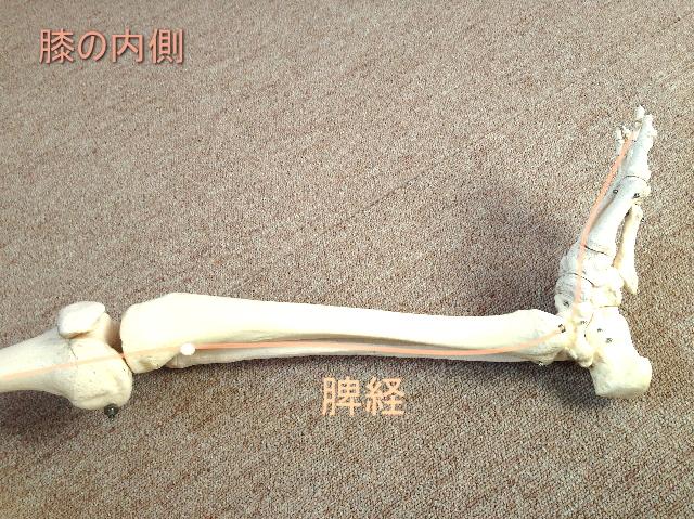膝の気の流れ・脾経
