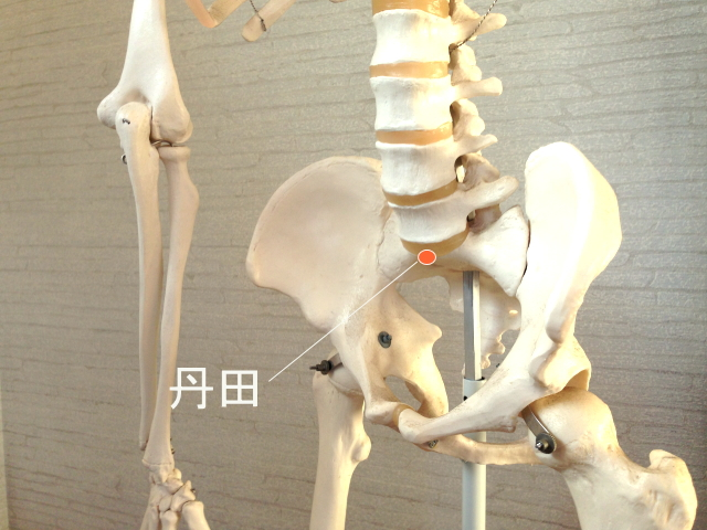 腰痛改善のコツ・丹田
