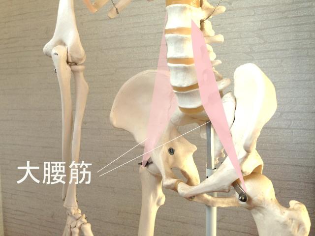 腰の姿勢を決める大腰筋