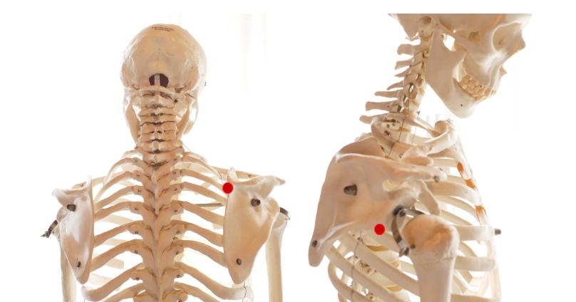 肩甲骨のツボ2点