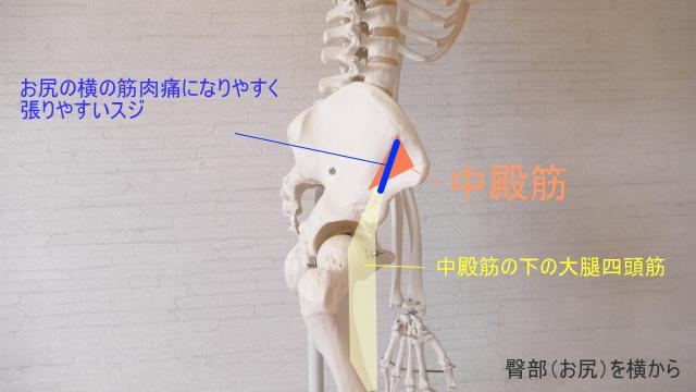 筋肉痛になりやすいスジ