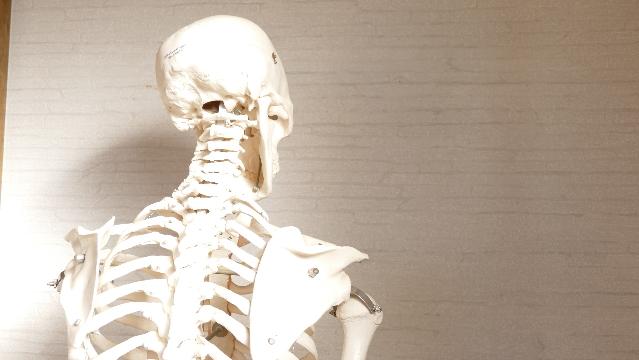 肩こりの原因、骨格