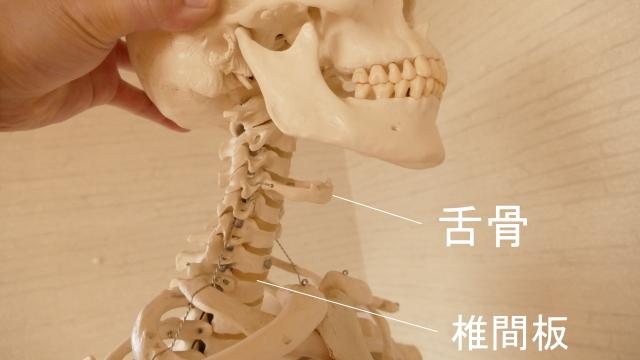 首の骨・した骨
