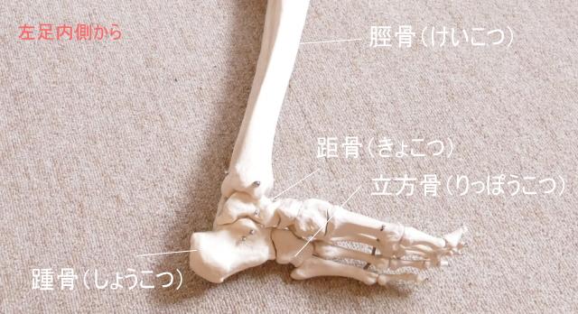 足首の骨格