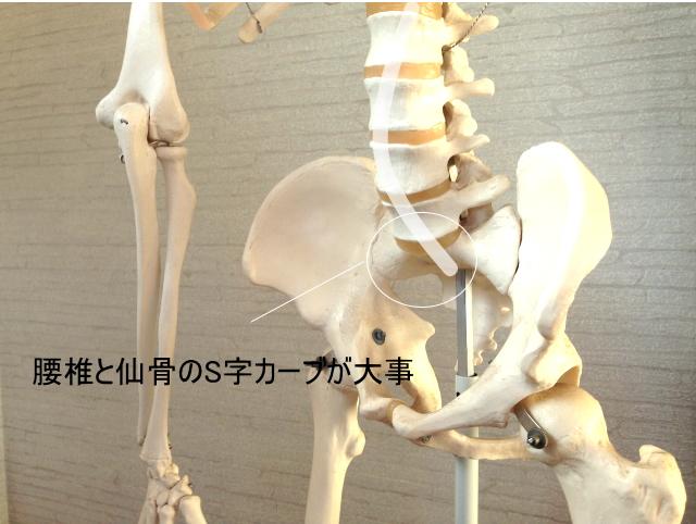 仙骨と第五腰椎