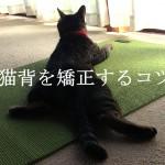 猫背を矯正するコツと注意点