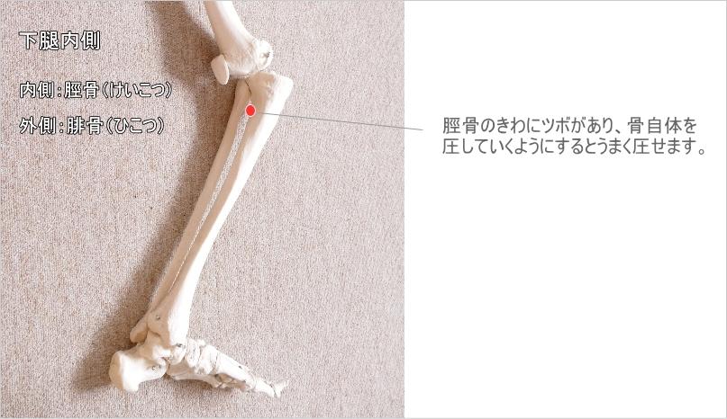 膝下のツボ