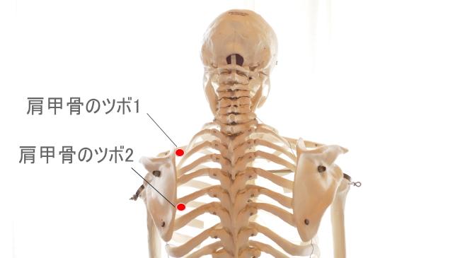 肩甲骨のツボの場所