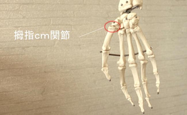 親指の関節・拇指CM関節