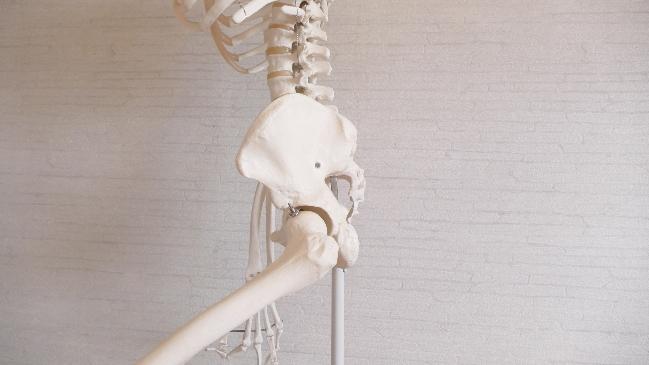 横から見た股関節