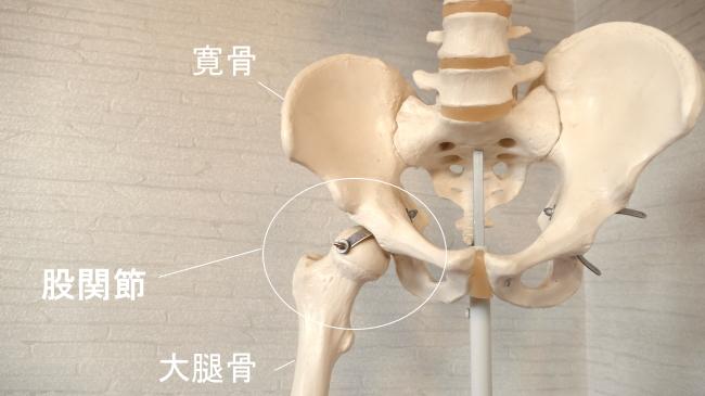 足の付け根の股関節