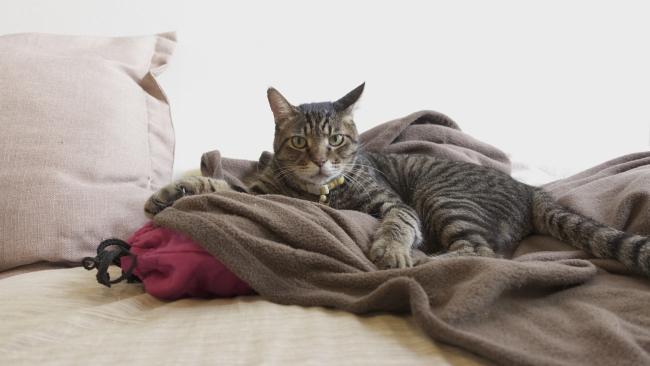 猫と湯たんぽ