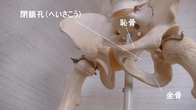 恥骨と坐骨が作る穴、閉鎖孔