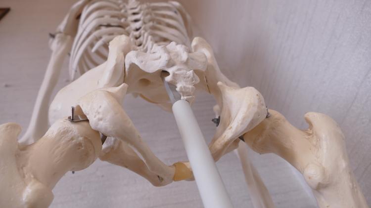 仙骨と尾骨