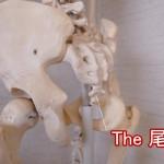 尾てい骨の場所