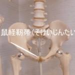 足の付け根の鼠経靭帯