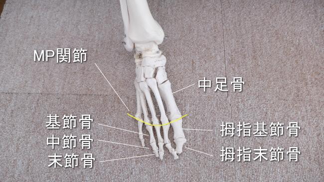 足の指の骨