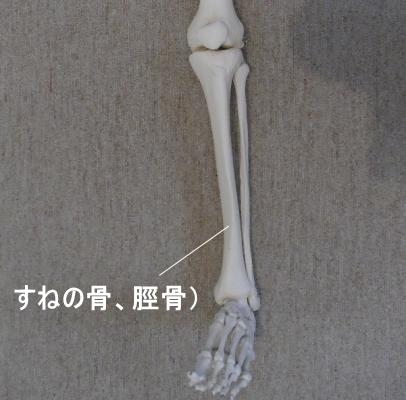 弁慶の泣き所である脛骨