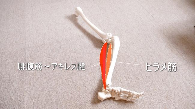 固いふくらはぎの筋肉