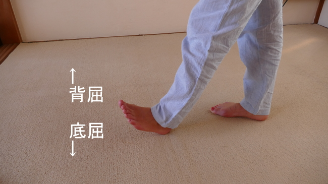 前脛骨筋の背屈