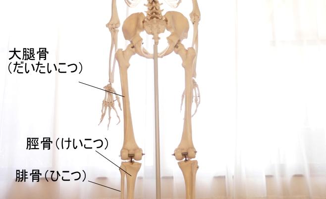 後面から見た下肢
