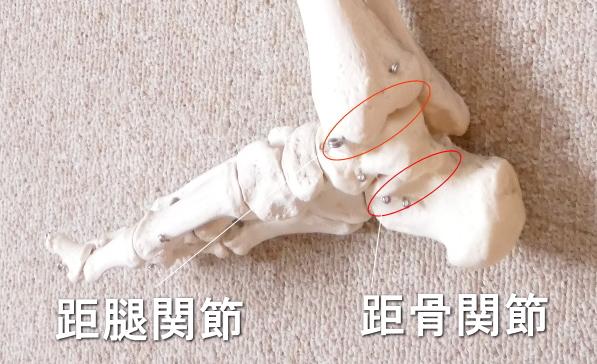 踵骨の関節