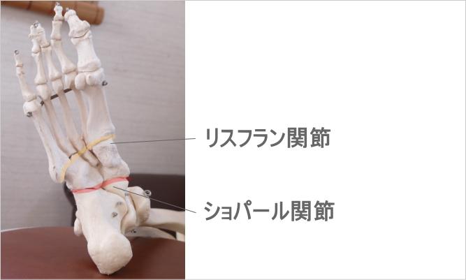 足首の関節(ショパール関節、リスフラン関節)