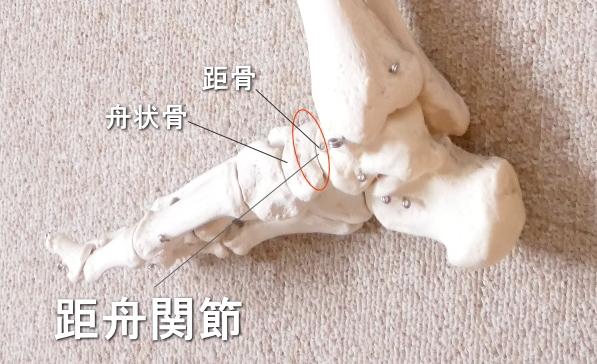 足首と距舟関節