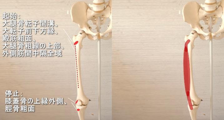 大腿四頭筋の外側広筋