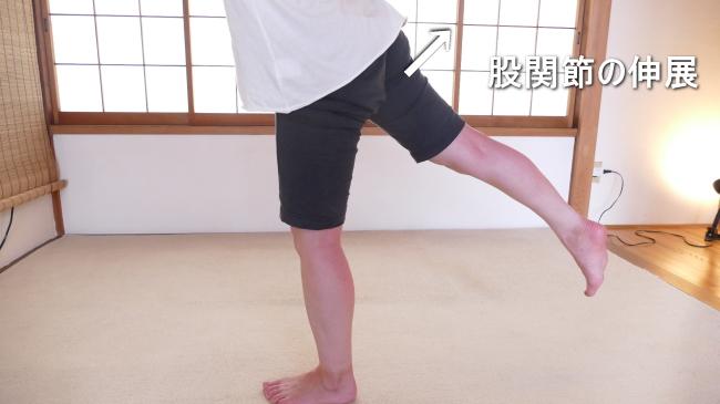 伸展の股関節の動き