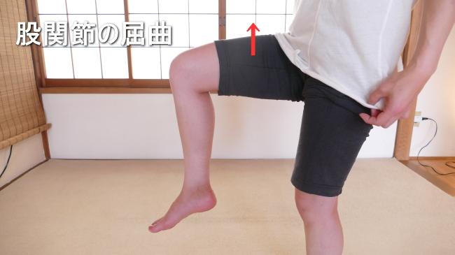 屈曲する股関節の動き