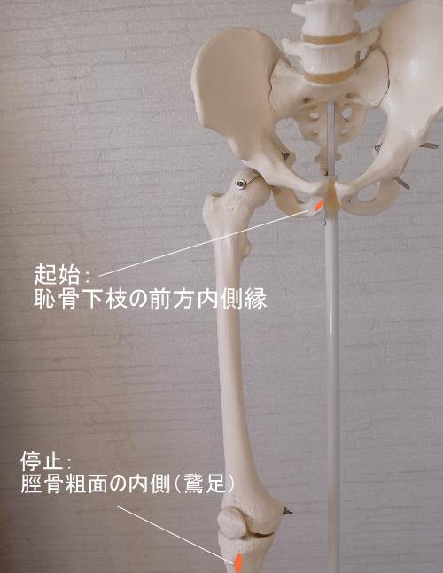 薄筋の付着部