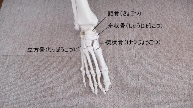 足の指の付け根の骨