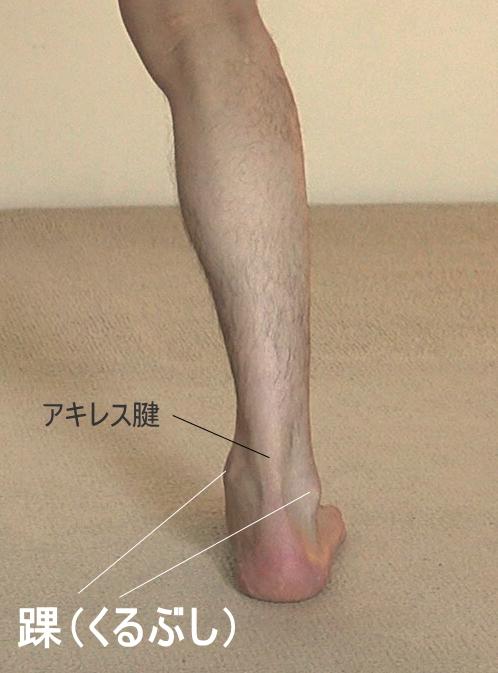 ヒラメ筋と腓腹筋からなるアキレス腱
