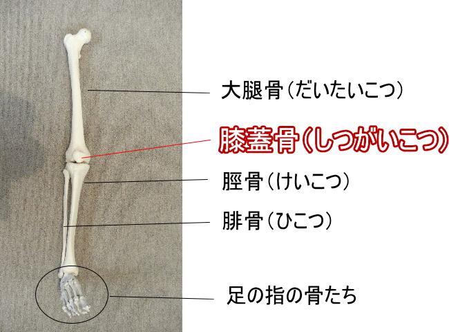 膝蓋骨の場所