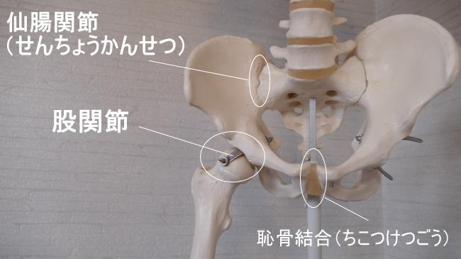 腸骨と仙腸関節