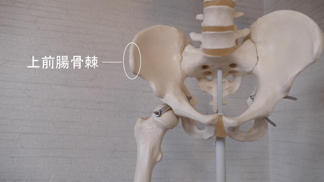 大腿筋膜張筋が付着する上前腸骨棘