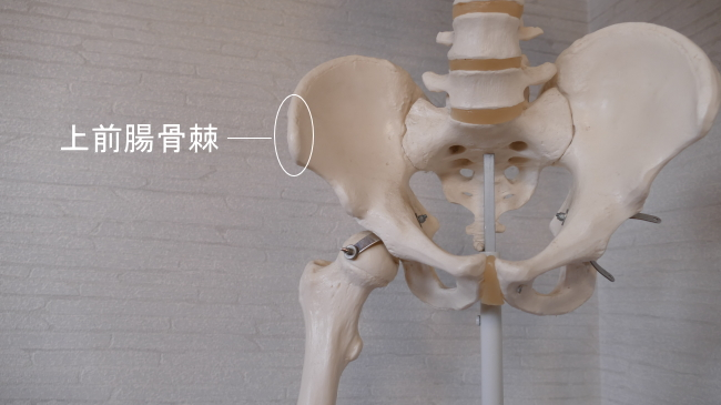 腸骨の上前腸骨棘