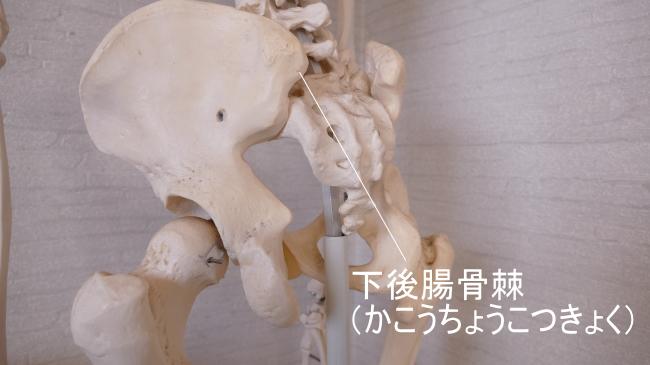 下後腸骨棘