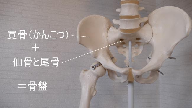 薄筋と骨盤