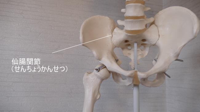 前から見た仙腸関節