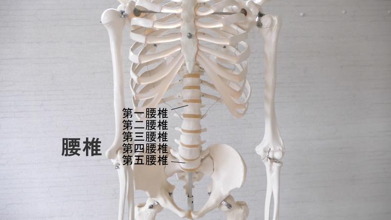 腰椎の場所