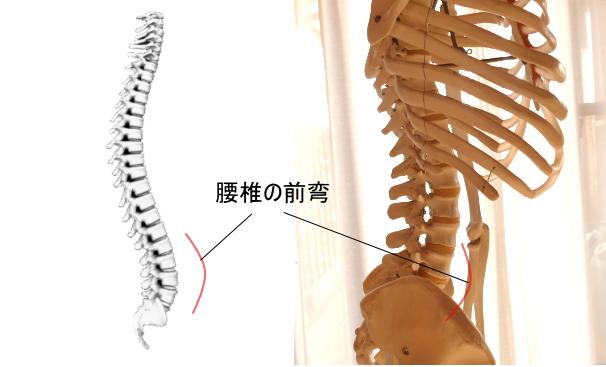 自然な状態では腰椎はお腹側に前弯しています。